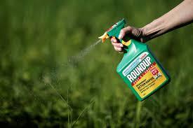 Monsanto condannata in udienza preliminare: quanto può essere pericoloso per Bayer