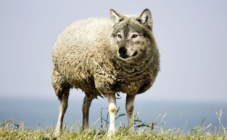 Attenti al lupo