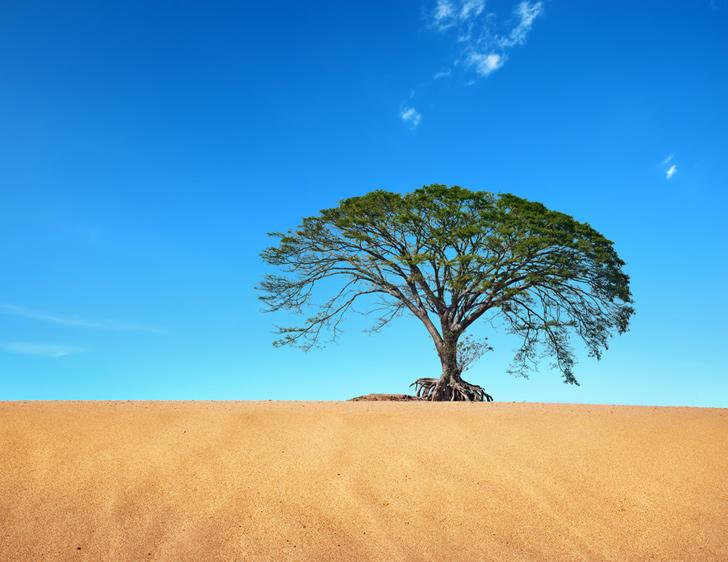 Contrordine compagni! Pare che il «Riscaldamento globale» renda il Sahara più verde!