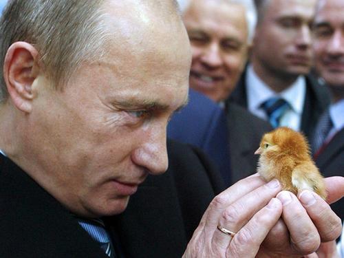 Influenza aviaria H5N8: casi in esseri umani in Russia