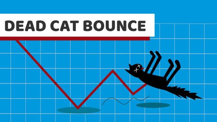 """""""Rimbalzo economia italiana""""? Si del gatto morto"""
