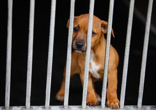 Pazzia Covid: in Australia si uccidono i cani per far ripettare il lockdown